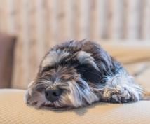 お留守番中の愛犬の気持ちがわかります どんな気持ちでお留守番してる?愛犬の思いを知りたい方に