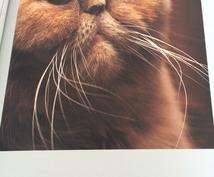 愛猫のおもらしに困っている方へ猫のオシッコの匂いの取り方教えます