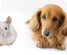 犬・チンチラ(ネズミ)の飼い方の相談乗ります 安心して長く一緒に暮らすために、何でも聞いてください!