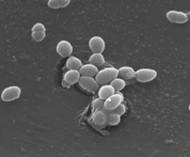 乳酸菌をまとめた資料。