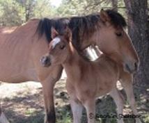 アリゾナから馬のファミリーの写真をお届けします☆彡