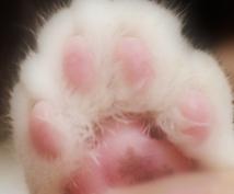 【掌球・指球・妙性占い】あなたの愛猫の手相を占います【肉球相占い】