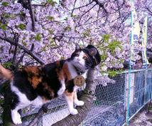 あなたのこころに、花がさく、ほっこりする猫や犬にまつわる心暖まるお話聞かせてください。