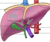 体の機能と構造を教えます 人体の構造や各臓器の理解を深めましょう。