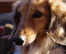ダックスフントのてんかん発作、経験談をお教えします てんかん介護経験約10年、愛犬のQOL向上を考えてみませんか