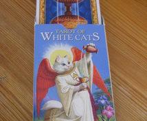 猫のタロットカードで占います 猫のタロットカードに訊いてみたいことがある貴方へ