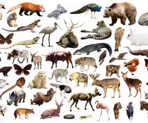 爬虫類、両生類、昆虫様々な生き物の飼育方法教えます 【犬猫だけがペットじゃないんです】