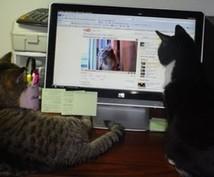 あなたの興味ある分野の英語動画探します 時間をかけたら自分でもできるけど・・・そんな忙しい方必見。