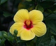 ホノルル(オアフ島)、ハワイ島の観光プランを提案します☆