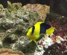 初心者に海水魚の飼育の仕方を教えます 海水魚を飼育してみたいけど難しそう。そう思っている方に