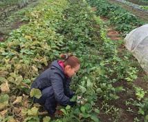 プロの有機農家が野菜のつくり方を教えます 家庭菜園で上手く野菜をつくれない方や野菜栽培に興味のある方へ