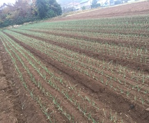 農業の栽培に関することや機械の選び方の提案します 家庭菜園などのアドバイス等も受け付けております。