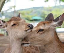 奈良観光プラン作成致します 奈良生まれ関西在住者が本気であなたにあった提案をいたします!