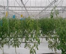 タイへの農業進出支援や情報提供を行います タイで有機堆肥の生産販売、農業コンサルティングを行っています