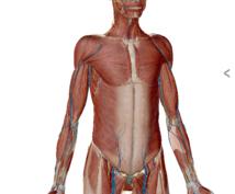 その症状!専門知識からアドバイスを致します 長時間同じ姿勢とらないといけなくて肩や腰が重い方!