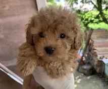仔犬の購入に関してアドバイスさせていただきます 大手ペットショップ仔犬バイヤーが仔犬選びをお手伝い!