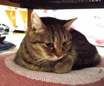 ブザかわ~美人まで!猫写真送ります 普段見れないリラックスした様子をどうぞ