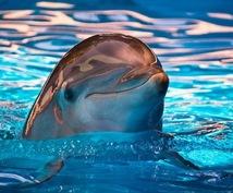 宇宙イルカのヒーリングをお送りします 〜Joyにあふれて軽やかにゆこう〜