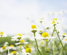 植物と繋がり♡高次のエネルギーでヒーリングします 草花や樹木からのメッセージもお伝えします♡