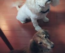 犬猫のしつけについて教えます ペットの問題行動にお困りの方ペットのちょっとした疑問がある方