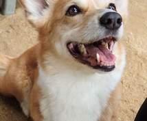 愛犬のしつけに悩んでいる!そんな時は、まず生活改善から。細かいアトバイス致します。お気軽にご相談を。