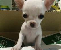 ペットショップ店員が貴方に最適なペット紹介します これからペットを飼おうと思われてる方に!