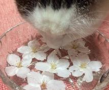 【お気軽☆ワンコイン☆木花咲耶姫さま桜花 (おうか) ヒーリング】 不安や恐れを手放して才能開花♪