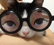 犬猫医療ー病気の説明と簡単なセカンドオピニオンします。