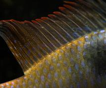金魚や熱帯魚を飼いたい方、的確なアドバイスをします お家で魚を飼ってみたいけど、どうすれば?何を揃えれば?