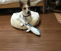 トレーナー目線を教えます 犬と過ごすには何処に注意して犬をみるといいの?