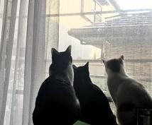 愛する猫ちゃんのお名前考えます 猫ちゃんの名前が思いつかない!いくつかの候補から選びたい人!