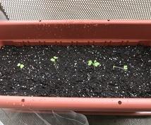 家庭菜園の相談乗ります 初心者大歓迎。家庭菜園の始め方から。