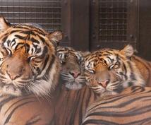 動物達の面白い豆知識や生態教えます この夏、お子さんや彼女と動物園に行く方々発見!!