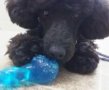 現役専門学生が教える、愛犬のお悩み相談承ります 愛犬の問題行動を直したいあなたに!