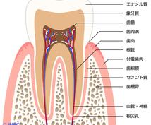 歯科業界未経験の方、分からない事教えます 基本的な事が分からない!そんなあなたへ
