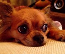 動物看護師がペットとの暮らしの相談にのります 動物看護師がパピー〜シニアのペットとの暮らし相談に乗ります。