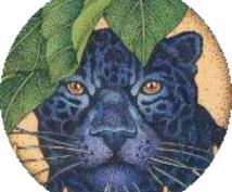 メディスンカードで占います 52の動物達が、あなたの心の答えを導き出します。
