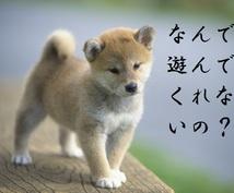 愛犬との関係がわかる方法を簡単に教えます ペットの気持ちがわからない人におススメ!