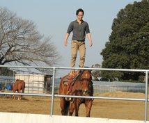 馬に乗りたい・馬と遊びたい方へ、あなたに合った乗り方や場所をアドバイスします(外乗情報も多数有)