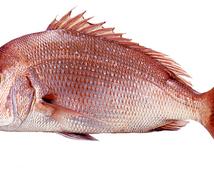 主婦必見☆魚のさばき方おしえます 主婦向け☆魚を1から捌きたいあなたへ。