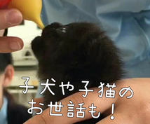 わんちゃん猫ちゃんの飼い方の相談にお答えします 元動物看護師がしつけやご飯、病気など飼い主様の疑問に答えます