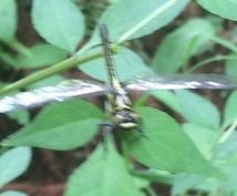 昆虫の採り方、見つけ方教えます お子様と生物の触れ合い助けます