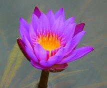 心を癒すバッチフラワーエッセンスを選びます 自然のバイブレーションを使って、心を癒します