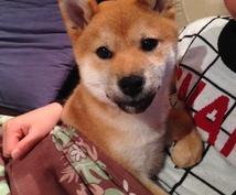 初めて犬を飼い始めた皆さん!ワンちゃんに様々な恩恵をもたらす「ラブ♡ハンド」を紹介します♫
