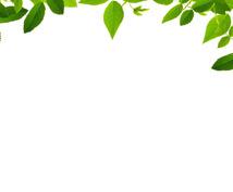 植物に関する副業 簡単 儲かるお約束!