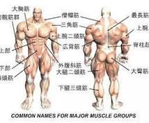 貴方にあった器具を使わない筋トレを伝授します 筋肉を付けたい〜腰痛・関節痛を和らげたいあなたへ