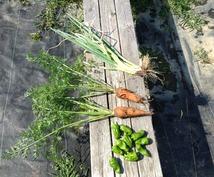 野菜を作りたい方!農地確保から収穫まで教えます