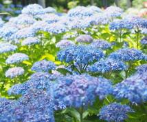 プロが植物に関するお悩み解決致します 植物のプロが即日お答え致します(^^)