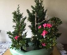 いけばな嵯峨御流の伝承花から現代花までお教えします 忙しい日常から少し離れて、花と語らい心をリフレッシュしたい方