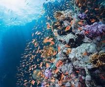 海水魚を初心者でも簡単に飼育できるようにします 海水魚水槽を自宅に設置しよう!初心者でも簡単に設置できます